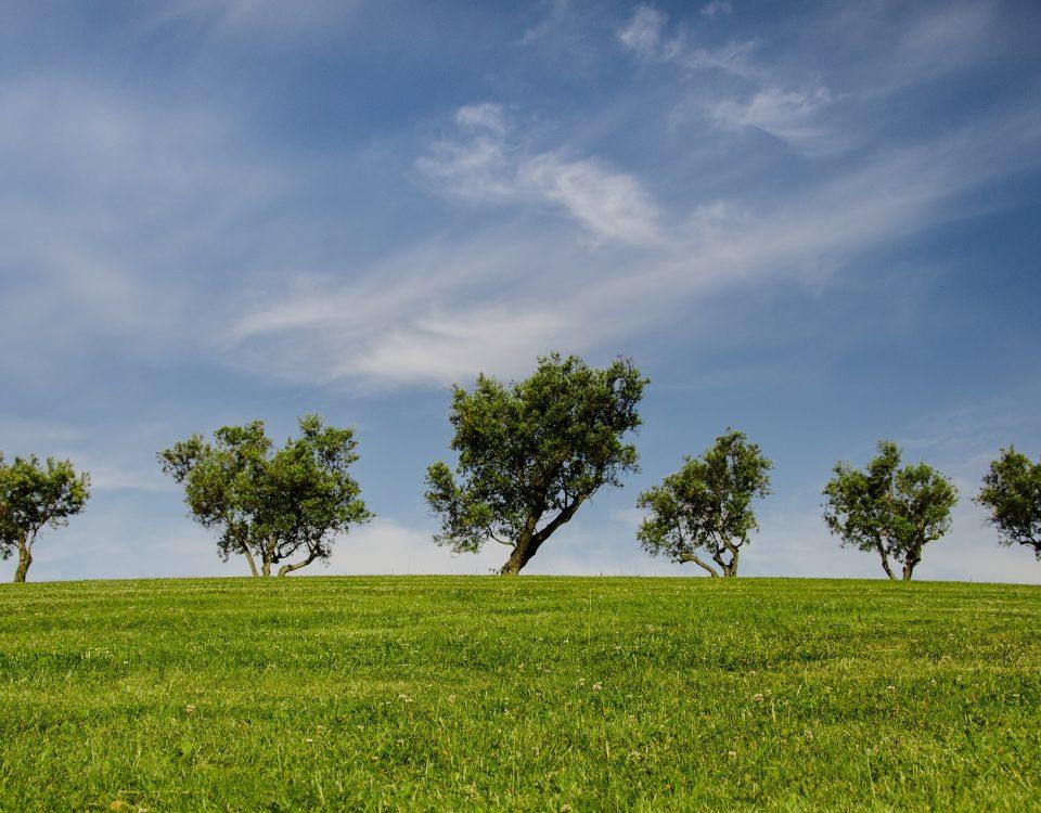 Row of Trees on the horizon.